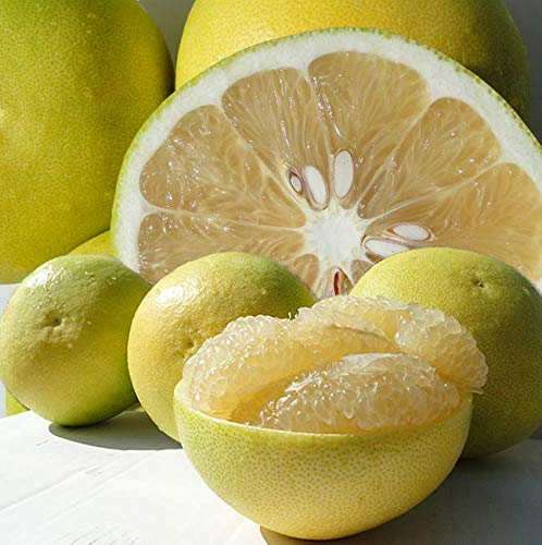 送料無料 ご家庭用 高知特産 水晶文旦 5~8玉入り 約3㎏ 文旦 秋の果物
