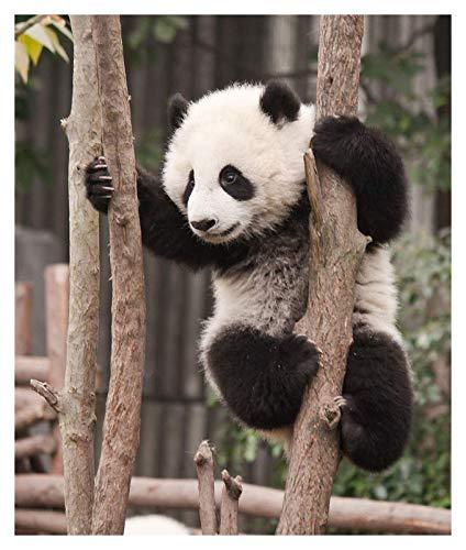 Hölzern 3D-Puzzle-Puzzle für Kinder Alter 8 Jahre und up-1000 Stück Puzzle für Kinder und Erwachsene-pädagogisches Intellektuelle Dekomprimieren von Spaß Game-Antelope-50x75cm (Farbe : Panda)