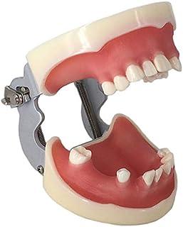 Amazon.es: odontologia equipos