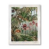 Orquídeas de finales del siglo XIX Cartel botánico Impresiones en lienzo Snapdragon Flores antiguas Plantas Arte de la pared Pintura Imagen Decoración de la habitación del hogar 50x70cm Sin marco