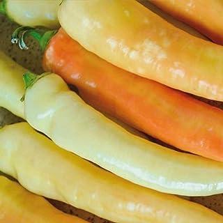 Fresh 30 Sweet Banana Pepper Seeds #TKTY