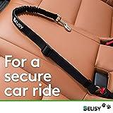 BELISY Hunde-Sicherheits-Gurt fürs Auto – höchste Sicherheit für Dich und Deinen Hund – mit besonders elastischer Ruckdämpfung für maximalen Komfort – passend für alle Hunderassen – höchste Markenqualität - 4