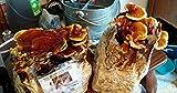 Mushroom Man LLC, Reishi Mushroom Kit - Indoor Growing Kit ~ Reishi's Legacy spans Centuries, Earning Global Recognition as a nutraceutical Species Supporting Longevity, General Wellness & Vitality!