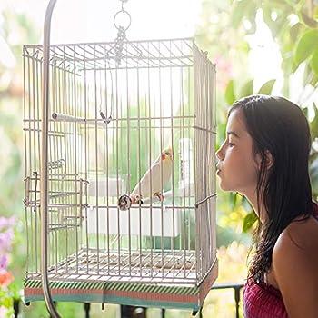 Fulushou Mangeoire à Oiseaux pour Cage 3 Pcs Abreuvoir pour Oiseaux Bol à Mangeoire pour Cage Bol d'eau en Plastique Boîte de Mangeoire pour Oiseaux Bol d'alimentation pour Cage pour Perroquet Pigeon
