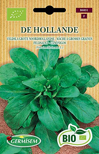 Germisem Feldsalat DE HOLLANDE