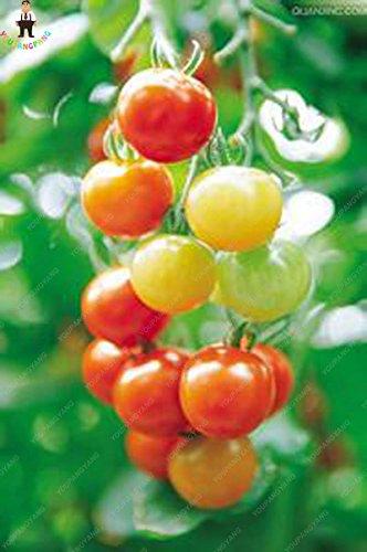 100pcs Violet Tomates cerises Graine Fruits et légumes Balcon Bonsai Seed Facile à cultiver jardin Plantes Violet pot