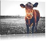 Pixxprint Kuh auf Butterblumenwiese als Leinwandbild |
