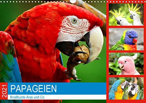 Papageien. Knallbunte Aras und Co. (Wandkalender 2021 DIN A3 quer)