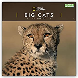 Big Cats National Geographic Square Wall Calendar 2022