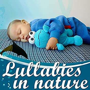 Lullabies in Nature: Sleeping With Dolphins