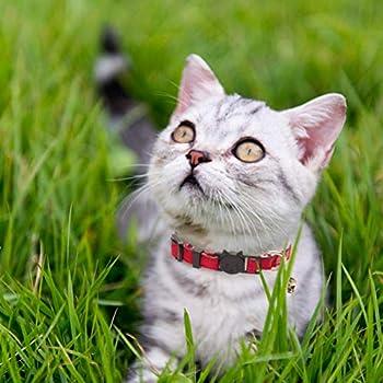 Collier pour chat, Colliers chats, Colliers pour Chat à libération Rapide avec Cloche réglable et sécuritaire pour Chaton Motif Carreaux Idéal 3pcs