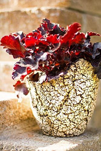 Serenti-Keramik | Keramik Pflanzgefäß frostsicher | Rustikale Optik | 30 cm Durchmesser | Winterfest | Unikat (C4)