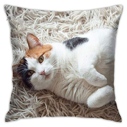 Funda de cojín Throw Cojín Throw Pillow Case Gato calicó Funda de Almohada 45X45CM