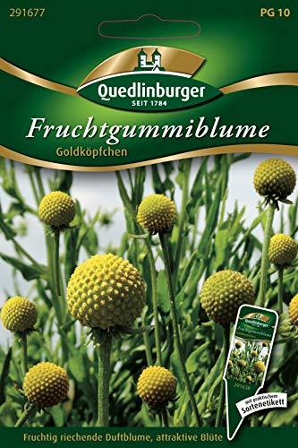 Fruchtgummiblume, Cephalaphora aromatica, ca. 25-30 Samen
