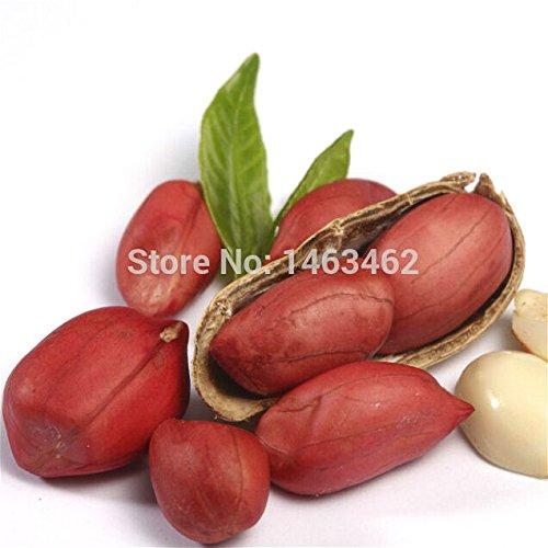Vente 10 Graines / Paquet arachide chinoise Graines bio rares Heirloom Jardin légumes plantes fruitières semences Germination Taux 95% Happy Farm