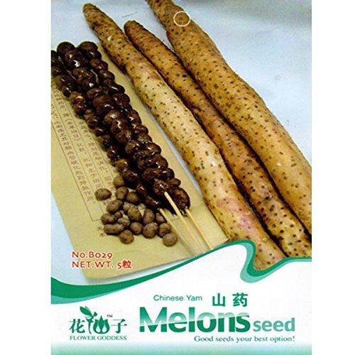 5pcs chinesische Yam Vegetable Seeds Garten krautige Pflanze