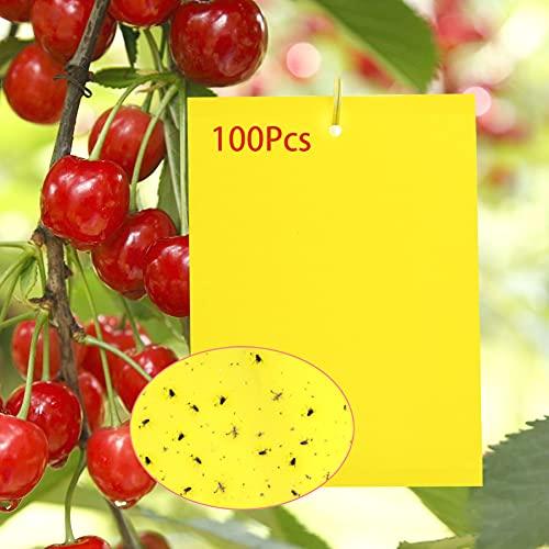 Y.A. LOTUS 100 Stück Gelbtafeln Klebrige Insektenfallen, Premium Gelbsticker Fliegenfalle, Gelbstecker Papiere für Gegen Trauermücken, Raupenleim, Minierfliegen und weiße Fliegen