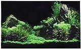 Fondo romántico del Tanque de los Peces del día de Tarjeta del día de San Valentín, Pegatina de Fondo Acuario Etiqueta de Hierba de la Hierba de la Pata de Agua de la Foto de la Foto de la Foto de la