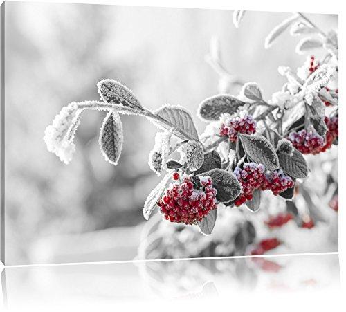 Vogelbeeren im frostigen Winter schwarz/weiß Format: 60x40 auf Leinwand, XXL riesige Bilder fertig gerahmt mit Keilrahmen, Kunstdruck auf Wandbild mit Rahmen, günstiger als Gemälde oder Ölbild, kein Poster oder Plakat