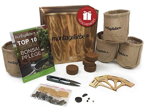 Montagsliebe® Bonsai Starter Kit Premium regalo per la coltivazione di 4 varietà scatola di legno con istruzioni e forbici