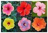Professional Nursery Grade Hibiscus Fertilizer 4 LB 6 Month Slow Release Tropical Plant Food
