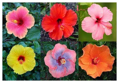 Professional Nursery Grade Hibiscus Fertilizer 4 LB 6 Month Slow Release Tropical Plant Food