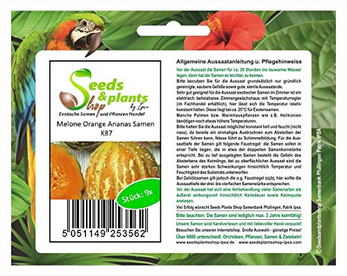 Stk - 9x Melone Orange Ananas Samen Obst Frucht Pflanze Saatgut K87 - Seeds Plants Shop Samenbank Pfullingen Patrik Ipsa