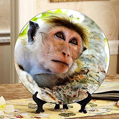 AQQA Funny Monkey in Nature Scen mart Cash special price Dec Decorative Party Cute Plate