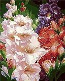 JRGGPO Flores de Colores DIY 5D Kit de Pintura de Diamante por número Niños Adulto Regalo Mosaico de Diamantes para decoración de la Pared del hogar(40x50cm Diamante Cuadrado)