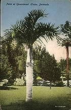 PAlm at Government House, Bermuda Hamilton, Bermuda Original Vintage Postcard