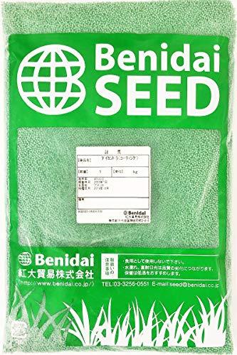 ダイカンドラ種子(コート種子)1kg・約1L(グランドカバー用)紅大貿易