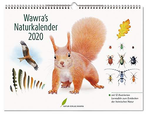 Wawra's Naturkalender 2020: mit 12 illustrierten Lerntafeln zum Entdecken der heimischen Natur