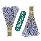 TURAKO Dried Lavender Bundles (2 Dry Flowers Bunch / 380-400 Stems) 100% Natural Lavendar Flower Sprigs Bundle - Dried Flowers for Arrangements, Wedding Bouqet & Home Decor