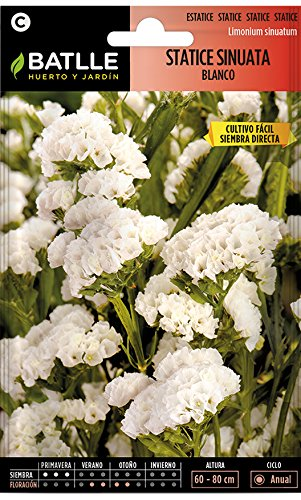 Semillas de Flores - Statice Sinuata Blanco - Batlle