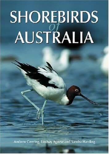 Shorebirds of Australia (English Edition)