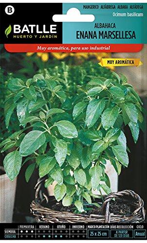 Semillas Aromáticas - Albahaca enana Marsellesa - Batlle