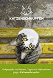 Ratgeber Katzenschnupfen