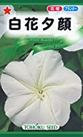 株式会社トーホク 白花夕顔 00744