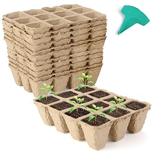 biodegradable tray - 3
