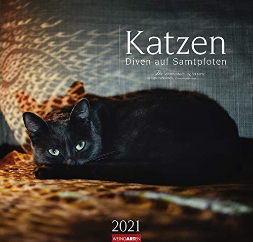 Katzen - Diven auf Samtpfoten - Kalender 2021 - Weingarten-Verlag - Fotokalender - Wandkalender mit bezaubernden Aufnahmen - 47,8 cm x 45,8 cm