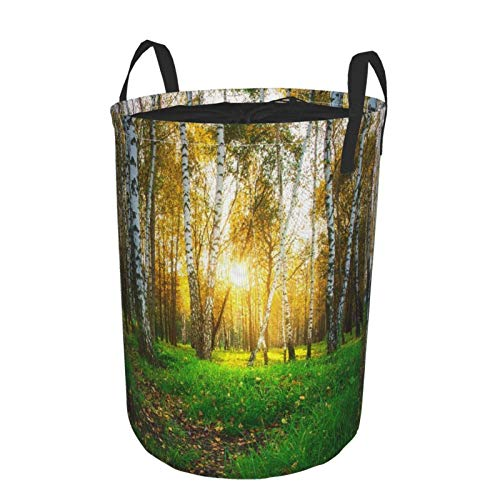 JOSENI Collapsible Large Clothes Hamper for Household,Autumn Birch Trees In Bright Sunlight,Storage Bin Laundry Basket Waterproof with Drawstring,14' x 19'