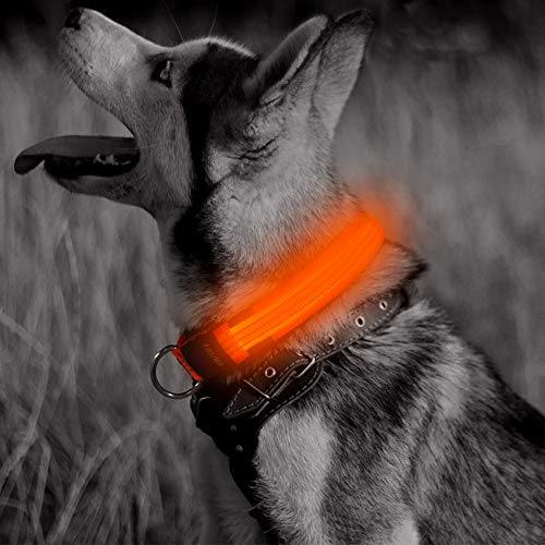 Clan_X LED Dog Collar USB Rechargeable