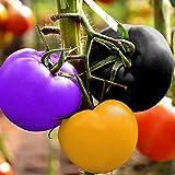 TOYHEART 200 Piezas De Semillas De Hortalizas De Primera Calidad, Semillas De Tomate, Dulces, Fáciles De Almacenar, Hortalizas Productivas, Semillas De Plantas para El Hogar arcoíris
