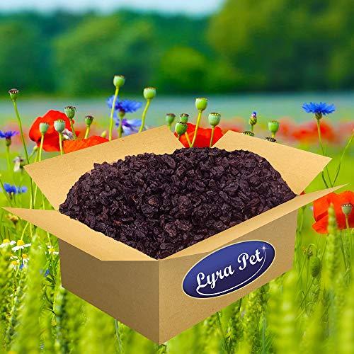 Lyra Pet® 10 kg Rosinen 10000 g für Futterzwecke Wildvogelfutter Vögel Premium Qualität