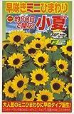 アタリヤ農園 種 早咲きミニひまわり 小夏 1ml
