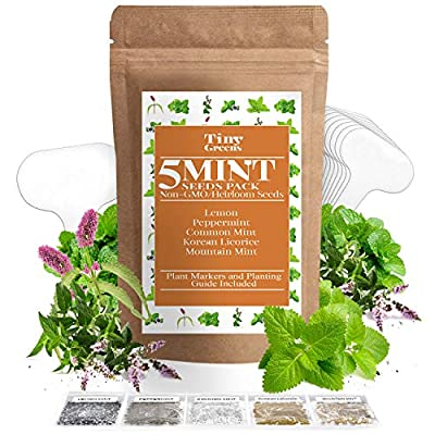 5 Mint Seeds Garden Pack - Peppermint, Lemon Mint, Mountain Mint, Korean Licorice, and Regular Mint - Perfect for Indoor or Outdoor Herb Gardens - Make Your Own Herbal Mint Tea   Heirloom & Non-GMO