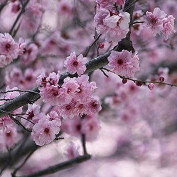 Sakura (Garden Of Enlightenment)