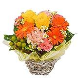 花由 バラと季節の花 おまかせ生花アレンジメント Sサイズ ビタミン マケプレお急ぎ便