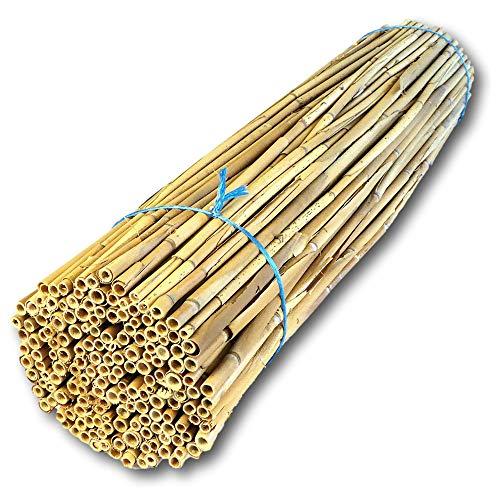 Hiss Reet® Schilfrohrhalme MEDIUM als Insektenhotel Füllmaterial I Ideal auch als Niströhren für Wildbienen, Bienenhotel geeignet I Verschiedene...
