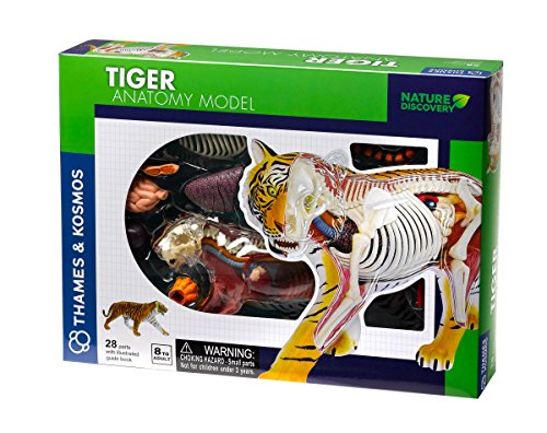 Thames & Kosmos 261050 Tiger Anatomy Toy, Fun 3D Model, Inspire Children to Learn About Our World and The Creatures That Live on it, Nature Discovery, Ages 8+, Multi